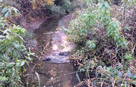 0.03 cfs at Buckner Creek near Jetmore, KS on Oct. 9, 2015. Photo by Andrew Clark, USGS.